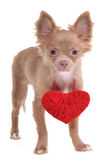 Puppy Wearing Red Valentine Heart Necklace Stock Photos