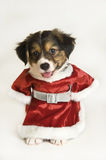 Puppy wearing a Santa Claus outfit Stock Image