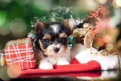Puppy wearing a santa hat royalty free stock image
