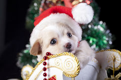 Puppy wearing a Santa hat Royalty Free Stock Images