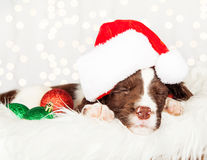 Puppy Wearing Santa Hat While Napping On Fur At Home Stock Image
