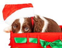 Puppy Wearing Santa Hat While Sitting In Gift Basket Royalty Free Stock Photo