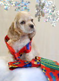 Puppy wearing seasonal tie. American cocker spaniel puppy with bright christmas tie Royalty Free Stock Photography