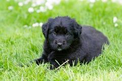 Puppy in weide stock afbeelding