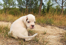 Puppy white bower Stock Image