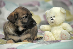 Puppy with a white teddy bear Royalty Free Stock Images