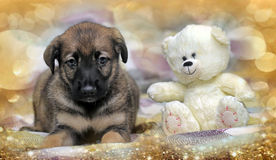 Puppy with a white teddy bear Royalty Free Stock Photos