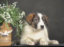 Puppy and wicker basket with flowers Stock Images
