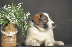 Puppy and wicker basket with flowers Royalty Free Stock Photography