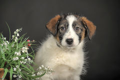 Puppy and wicker basket with flowers Stock Image