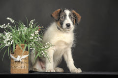 Puppy and wicker basket with flowers Stock Photography