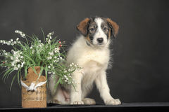 Puppy and wicker basket with flowers Stock Photo