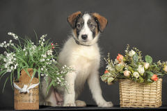 puppy and wicker basket with flowers Royalty Free Stock Images