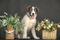 Puppy and wicker basket with flowers Royalty Free Stock Photo