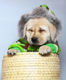 Puppy in winter clothes. Royalty Free Stock Photos