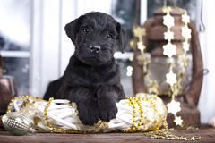 Puppy  in winter decor Royalty Free Stock Image