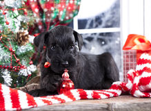 Puppy  in winter decor Royalty Free Stock Photos