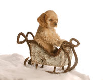 Puppy in winter sleigh Stock Photos