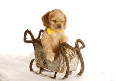 Puppy in a winter sleigh Stock Photos