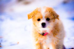Puppy in Winter Stock Photos