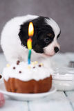 Puppy With A Celebratory Cupcake Royalty Free Stock Photo