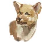 Puppy wolf Stock Photos