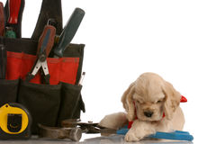 Puppy with work tools Royalty Free Stock Photo