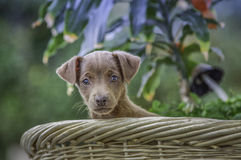 Puppy in the yard. Enjoying the lush vegetation in the sun Royalty Free Stock Image