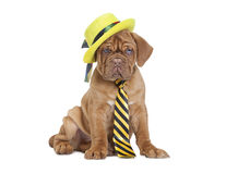 Puppy with yellow necktie and hat Royalty Free Stock Photos