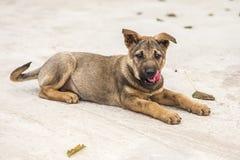 Puppy zeer leuk met rode tong royalty-vrije stock afbeelding