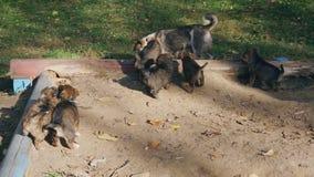 Puppy zonder ras het spelen met mamma stock videobeelden