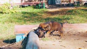 Puppybeet elkaar stock footage