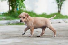 Puppyhond alleen op de straat Stock Fotografie