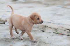 Puppyhond alleen op de straat Stock Afbeelding
