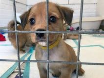 Puppyhond bij een reddingsschuilplaats in een kooi stock afbeelding