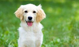 Puppyhond bij het park royalty-vrije stock fotografie