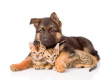Puppyhond die kleine katjes omhelzen Geïsoleerdj op witte achtergrond Stock Foto's