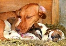 Puppyhonden in lunchtijd Stock Fotografie
