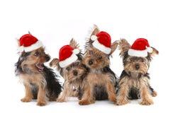 Puppyhonden met Leuke Uitdrukking en Santa Hat stock fotografie