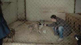 puppyhonden in schuilplaats achter omheiningswachten dat aan nieuw huis worden moet gered en worden goedgekeurd Vrijwilligersspel stock footage