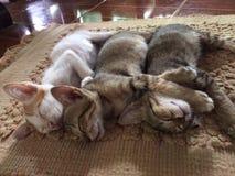 puppykatten Royalty-vrije Stock Foto's