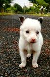 Puppyminnaar stock foto's