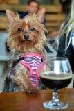 Puppypartij Royalty-vrije Stock Foto's