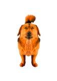 Puppyrood Royalty-vrije Stock Foto