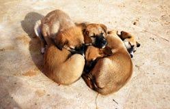 puppys 库存照片