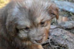 Puppys Obrazy Stock