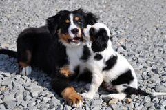 The puppys fun Stock Images