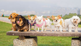 Puppys row in a row. On stone benches royalty free stock photography