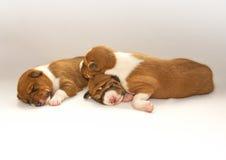 Puppys som sover på sängen Arkivfoto