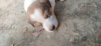 Puppyslaap stock foto